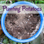 Surviving The School Holidays: CHEAP Activity No 3 – Plant Some Potatoes . . .